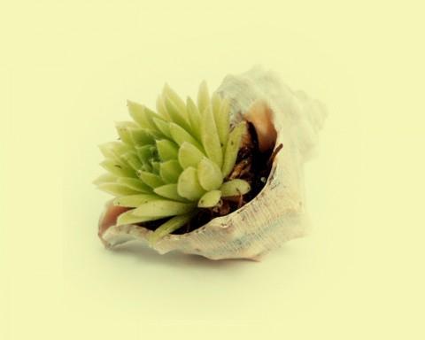 diango_hernandez_seashell-1